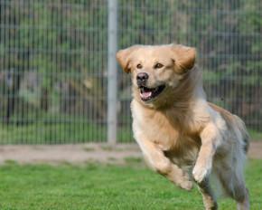 Dog Kennels Malaysia