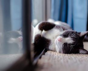 Pet Friendly Accommodation Malaysia